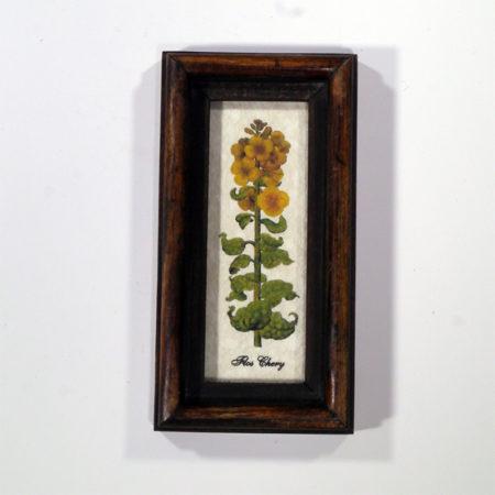 4 X 10 növénysorozat